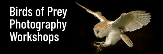 Birds of Prey Photography Workshops in Essex