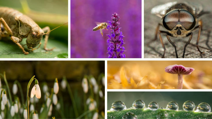 A selction of images from Daniel's Close-up and Macro Nature Photography talk.